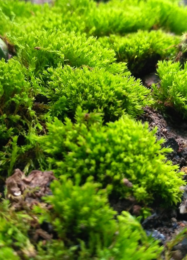 Green moss on a surface