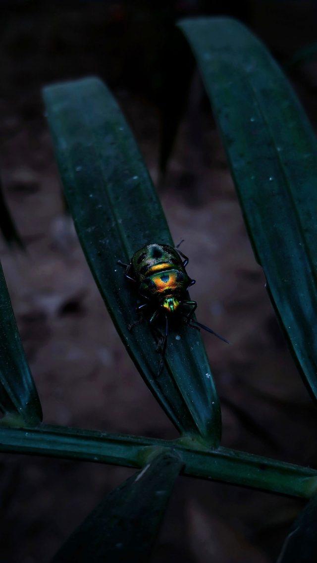 Glowing Beetle