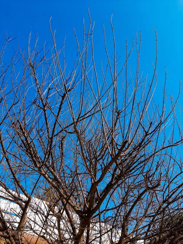 Leafless tree branches