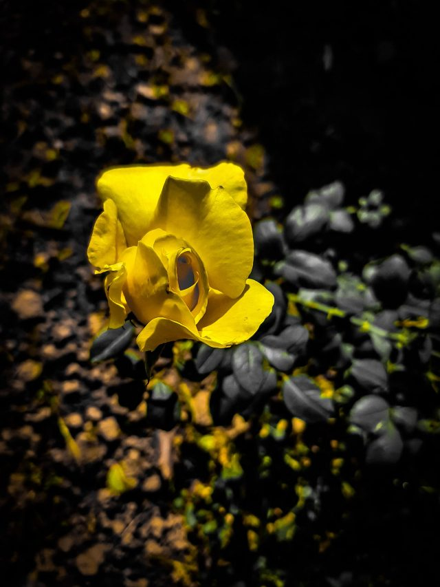 Yellow Flower in Forest