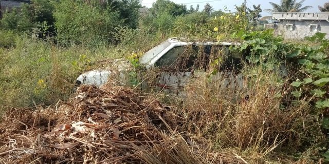 An old car in bushes