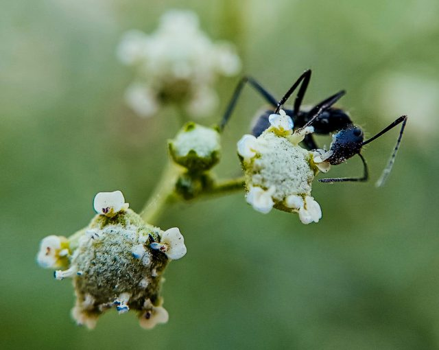 An ant on flower