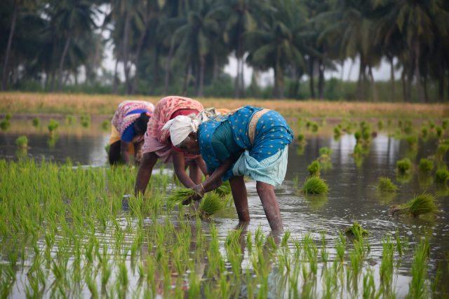 Farmers in field