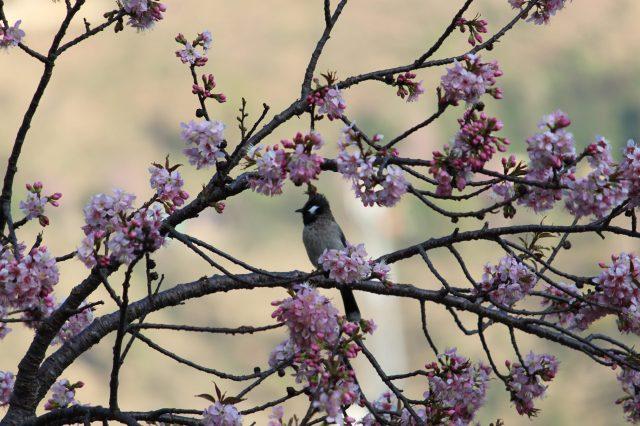 Bird enjoying on a full blooming tree