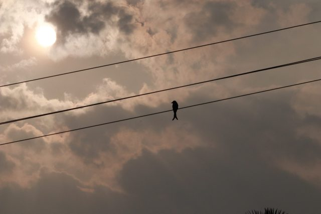 Bird sitting on electric cable