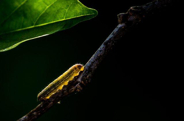 Caterpillar on a plant