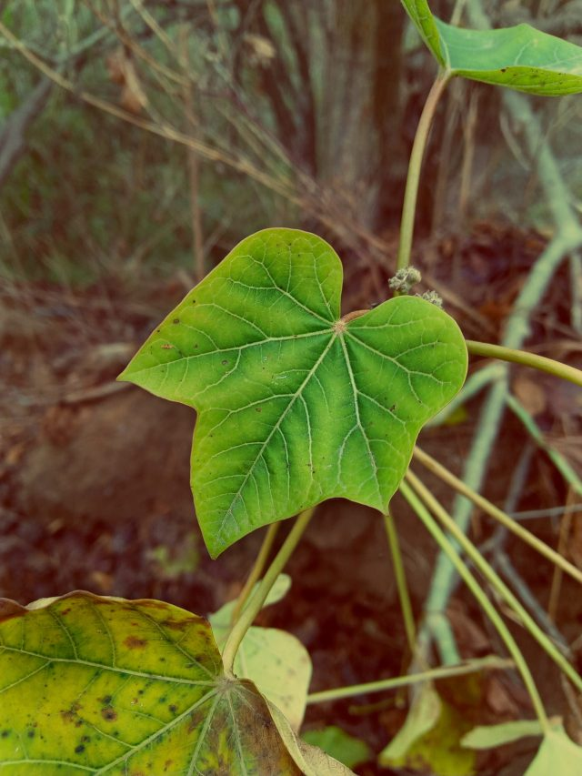 leaves of a plant