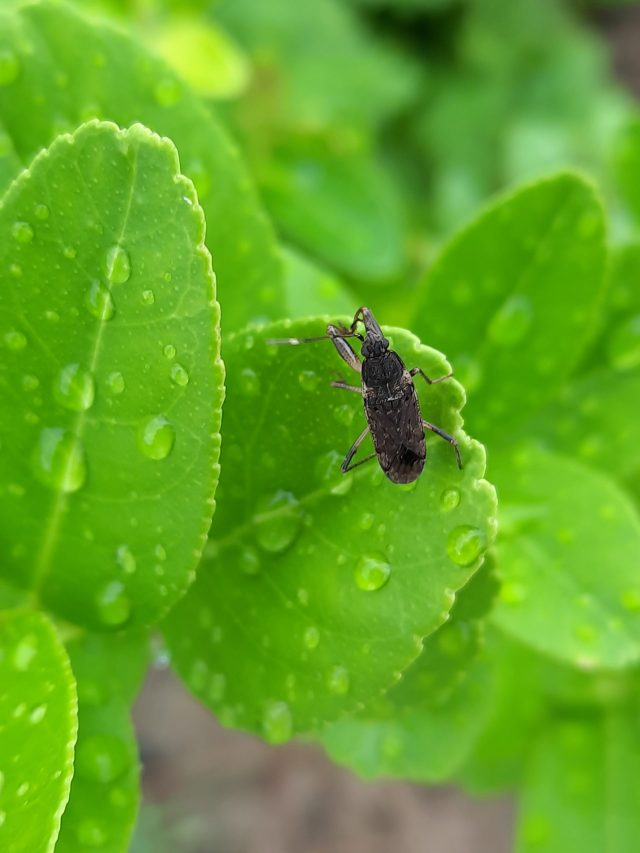Insect siting on a leaf