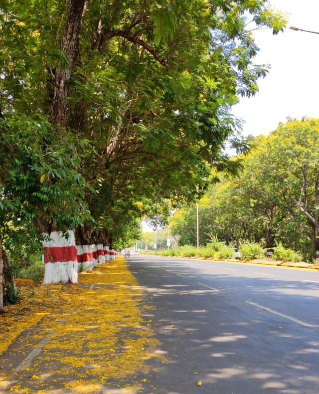 Landscape of road