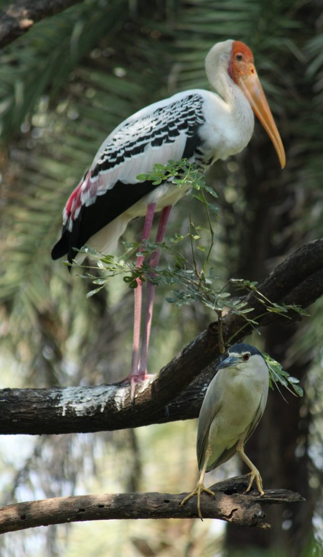 Painted storks on a tree