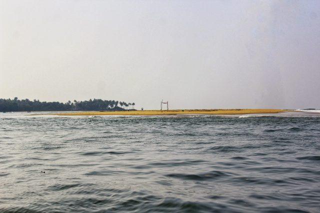 Seagull bird island