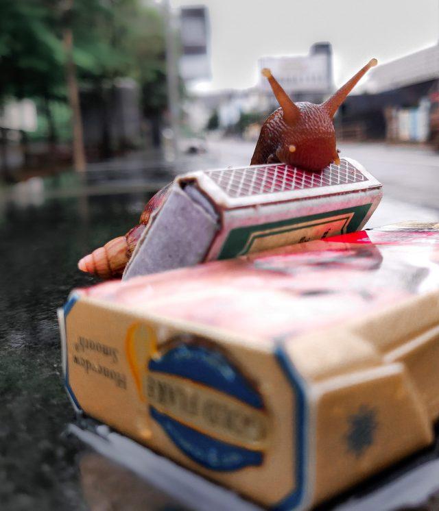 Snail over a matchbox