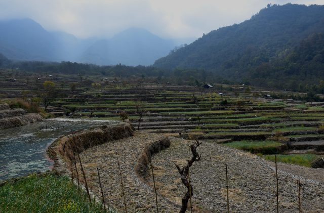 Step Cultivation among hills