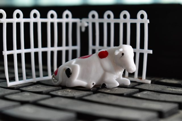 Toy cow on key board