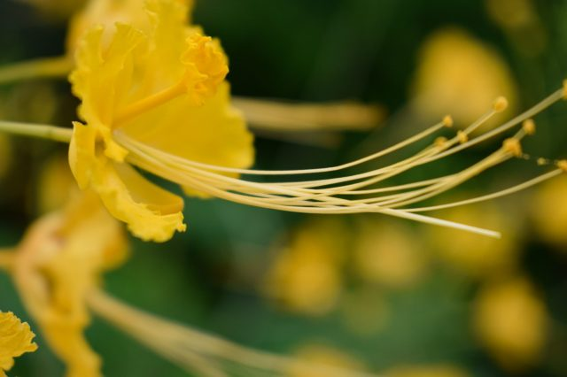 close-up of a yellow flower