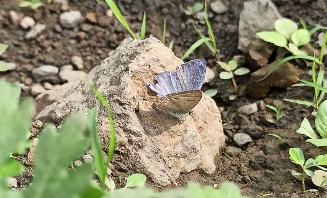 A butterfly on a stone