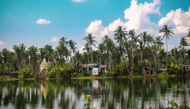 Coconut trees near the pond