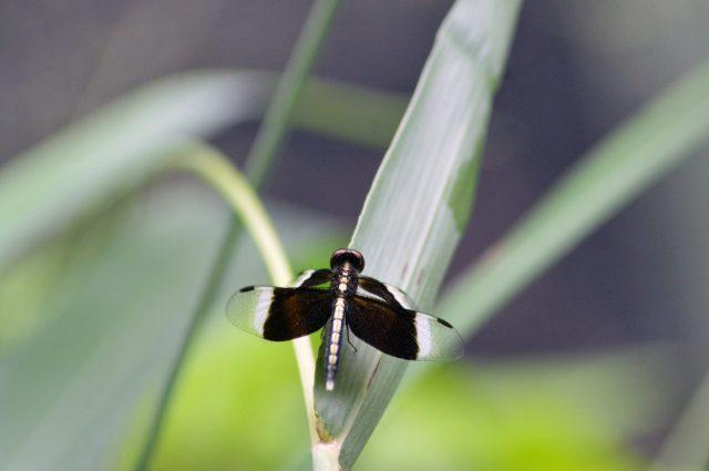 Dragonfly on plant leaf