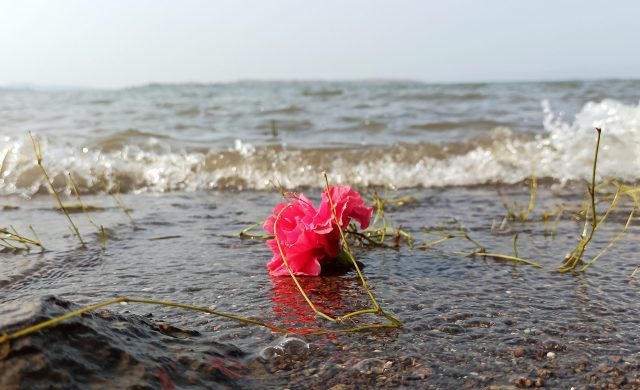 Flower in the sea