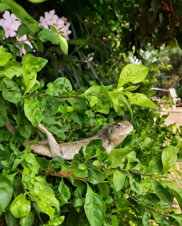 Garden lizard on the plant