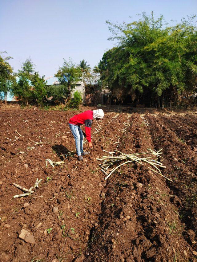 Man working in the farm