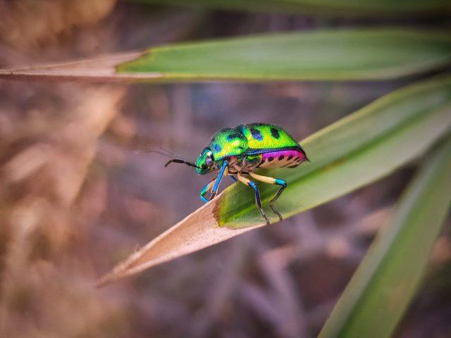 A bug on a grass leaf