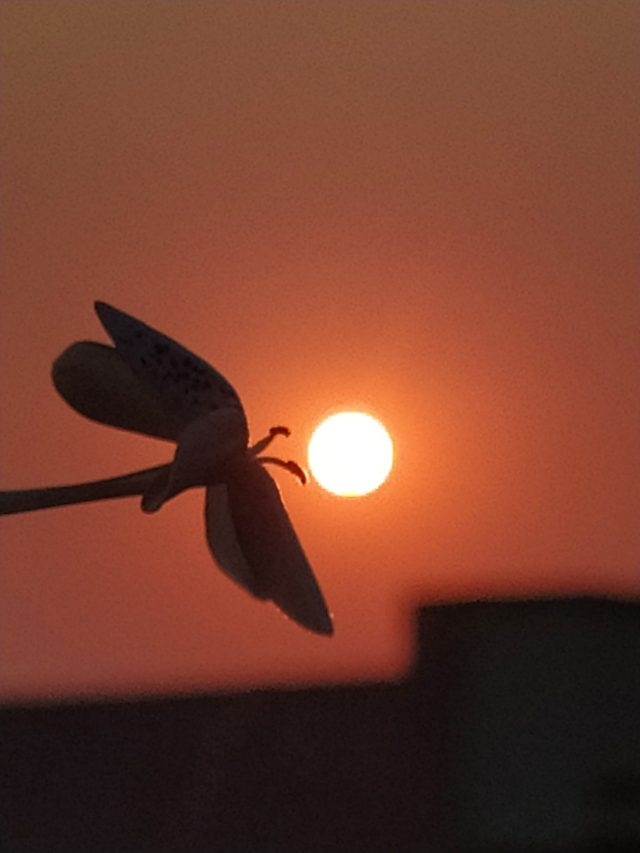 Silhouette view of flower