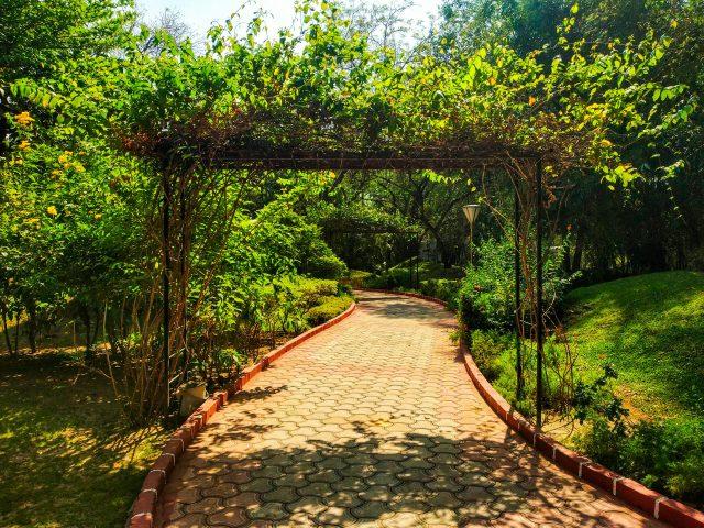 Walkway of the garden