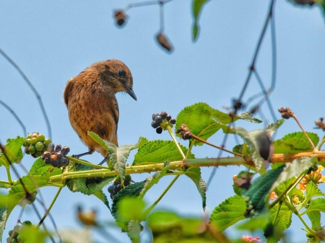 Bird sitting on the tree