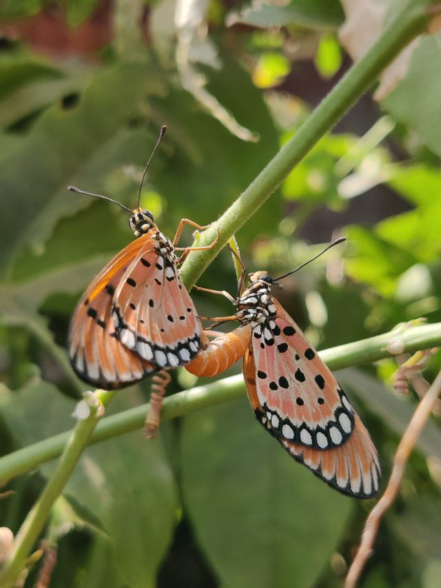 Butterfly on the plant stem