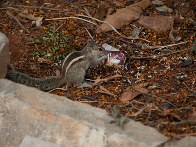 Cute little squirrel eating food
