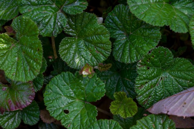 Green Leaves on plant