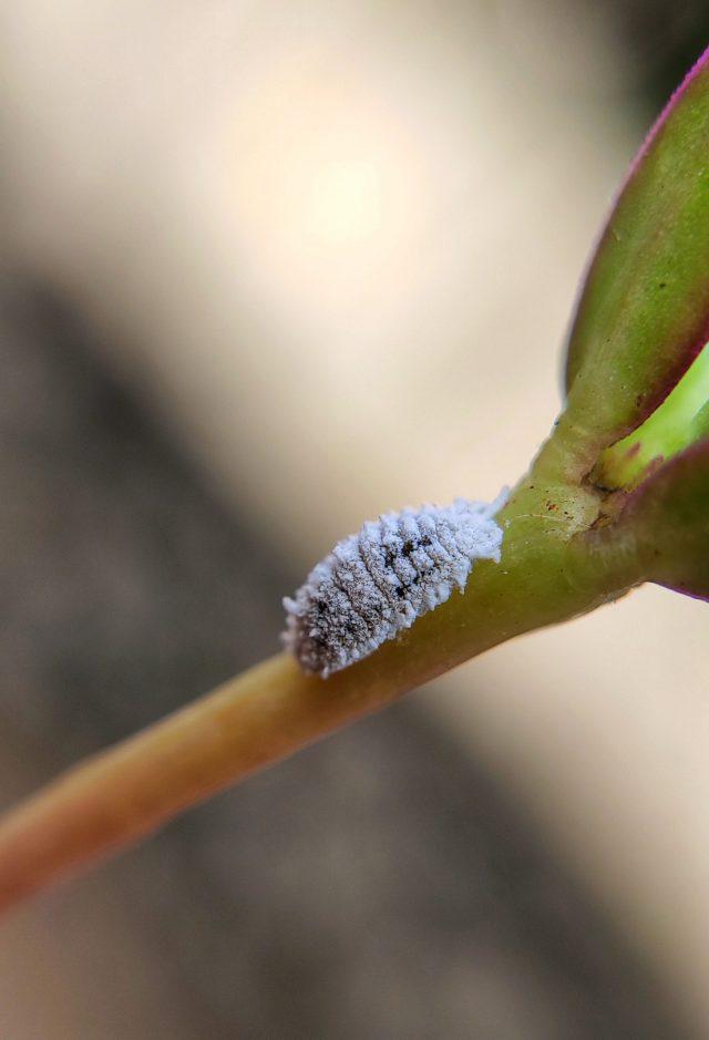 Pest on leaf