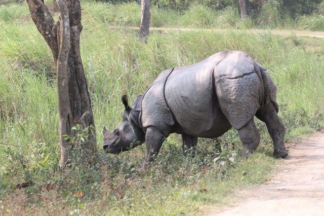 Rhino in the forest
