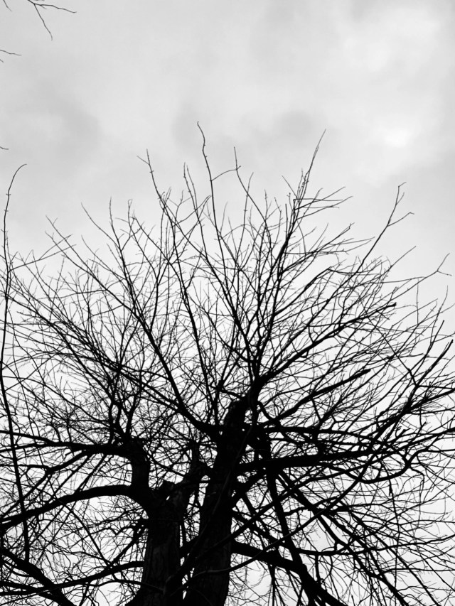 Tree without leaves under sky