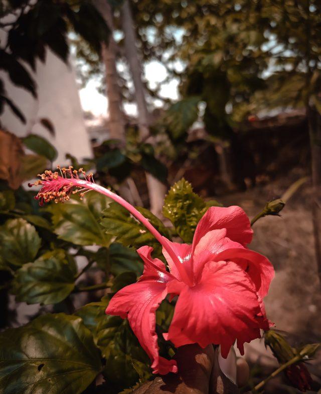 Flower on plant