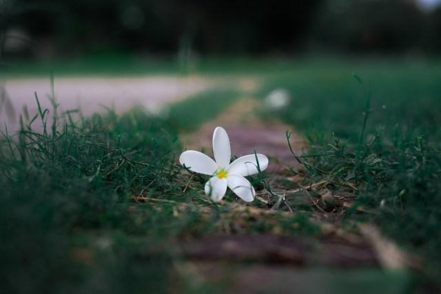 White Flower among grasses