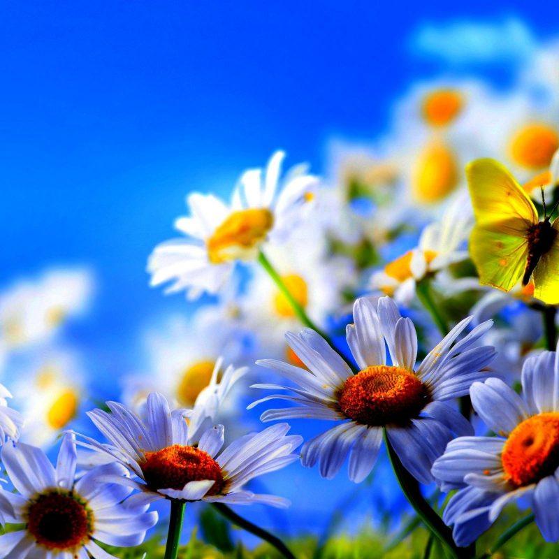 10 best spring flowers
