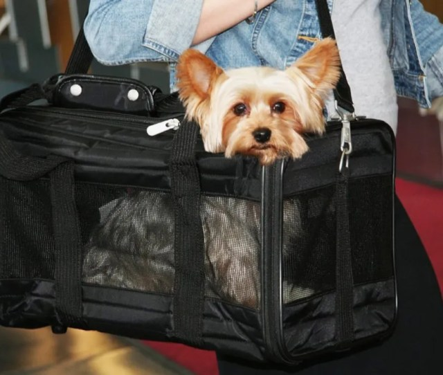 Sherpa Deluxe Pet Carrier Small