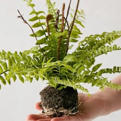 Artificial Plants For Living Room Design Ideas A Tiny 19 Best 2018 The Looking Trees And Flowers