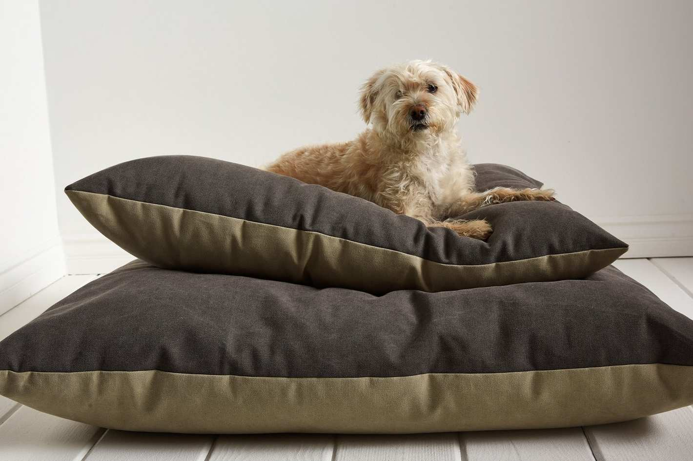 Parachute Dog Bed