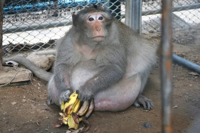 https://i0.wp.com/pixel.nymag.com/imgs/fashion/daily/2017/05/19/19-Uncle-Fat-thai-monkey.w710.h473.jpg?w=640&ssl=1