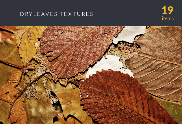 designtnt-textures-dry-leaves-small