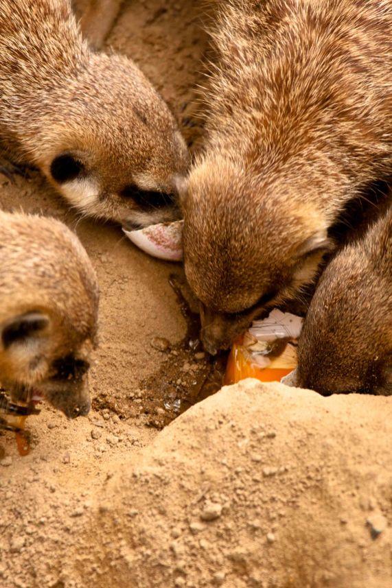 Osnabrücker Zoo
