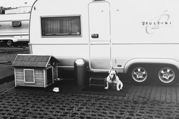 Von Menschen und Hunden (Mindener Messe)