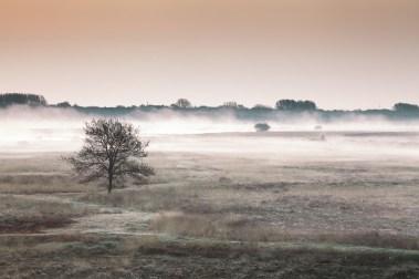 Sonnenaufgang über dem Hiller Moor