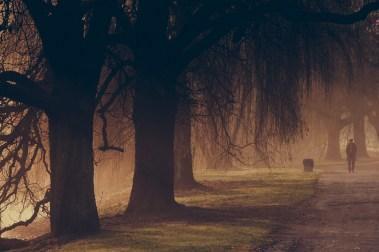 Nebel im Bürgerpark II