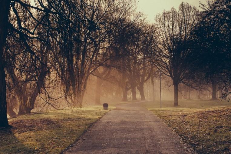 Nebel im Bürgerpark I