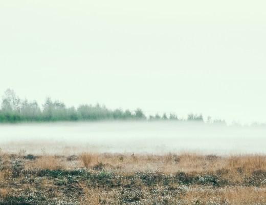 Nebel über dem Moor