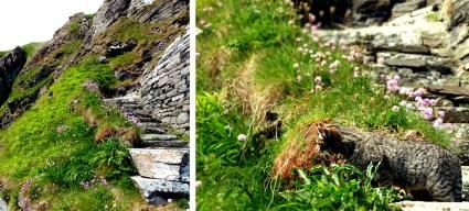 Scotland, The Steps at Whaligoe. 2012.